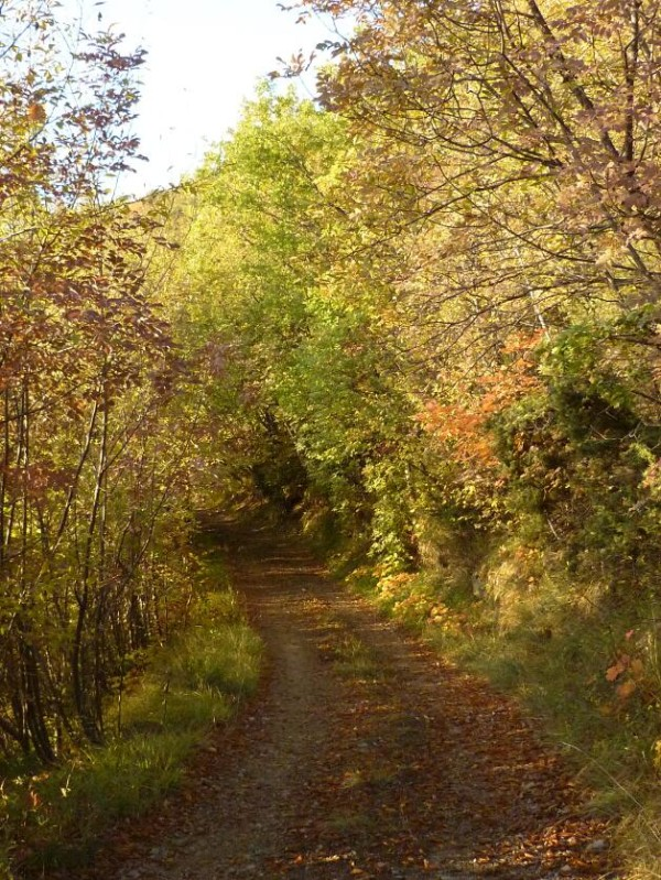 A part of the 1km road up to B&B La Fossa during autumn