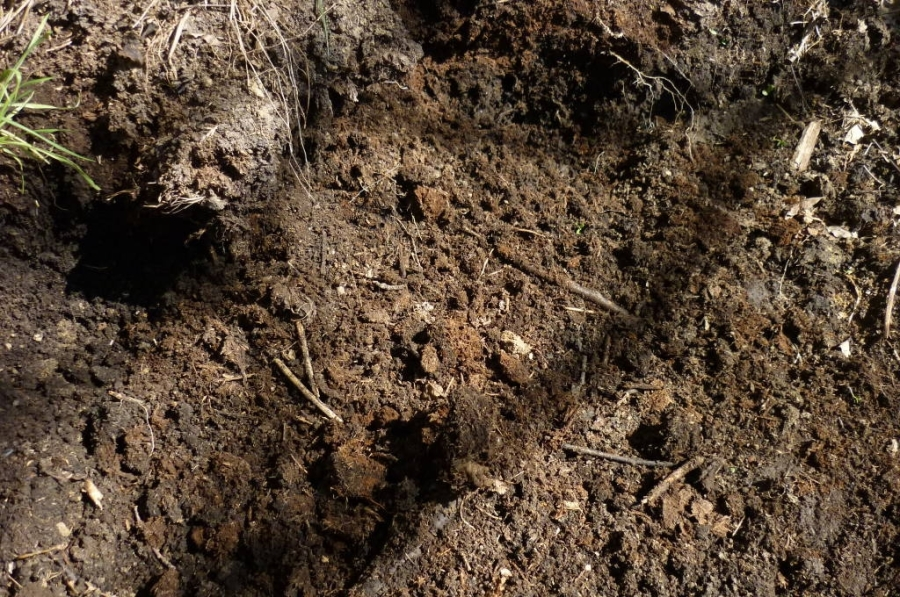 Compost ben maturo dal lettame del cavallo