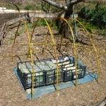Improvvisare una serra e seminare in contenitori vuoti del latte