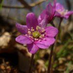 Le prime fioriture della primavera