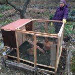 Chicken Tractor Pieghevole