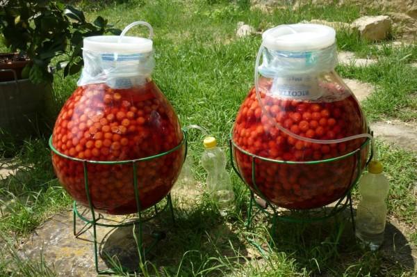 Le amarene che stanno fermentando nel sole nei vasi di 15 litri