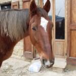 La storia del cavallo Max