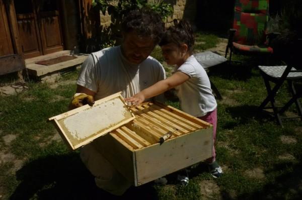 """Questo anno abbiamo raccolto35 kg di miele di acacia e 40-45kg di miele di castagno che sta ancora maturando. Il nostro miele<strong> non si può ancora comprare</strong>, pero' si può assaggiare questa delicatezza <a href=""""https://www.lafossa.eu/disponibilita/"""">facendo colazione nel nostro B&B</a>."""