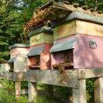 Le api e il miele della Fossa