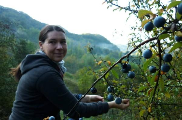 Tatiana raccoglie i prugnoli per fare il prugnolino