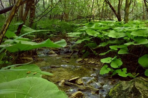 Vegetazione lungo il Riolco