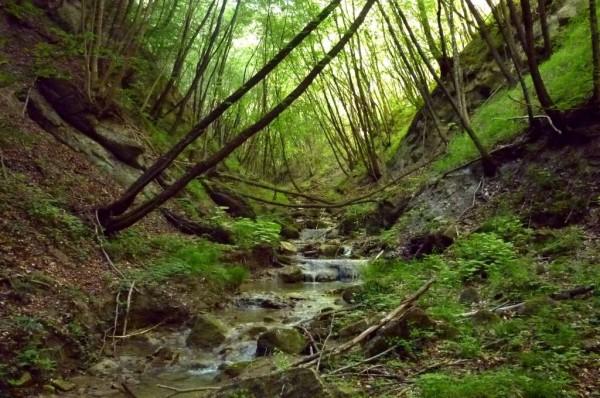 Il Torrente Riolco nel sic Val Tassaro