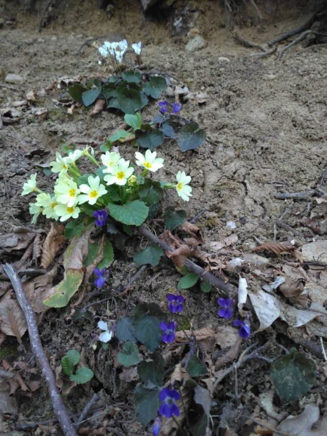 fioriture del sottobosco