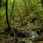 Il rio Tassaro