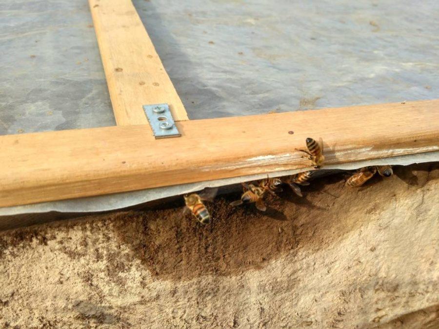 le api vengono a bere la condensazione calda