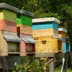 Vendita famiglie d'api